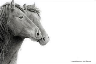 головы лошадей в профиль.серия Sable Island horses фотографа Roberto M. Dutesco