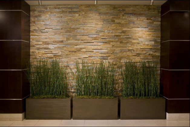 растения в современном интерьере