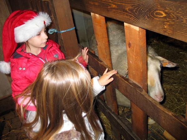 дети, овечка и  и рождественский ковчег Лювен